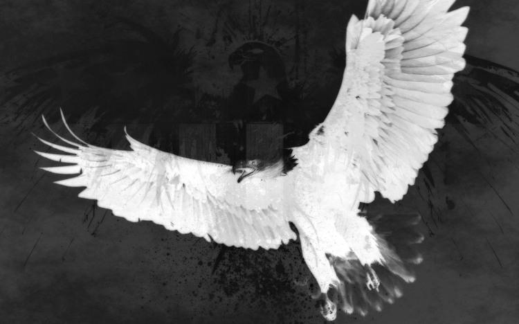 black_and_white_eagle_by_silentkillur